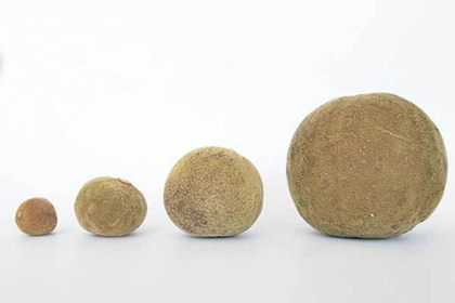 化州橘红大小果的对比图片