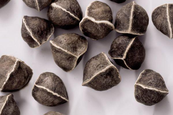 辣木籽可以榨油