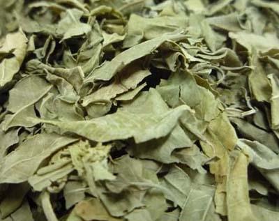 罗布麻叶干叶 淡绿色或灰绿色,皱缩卷曲,质脆亦碎